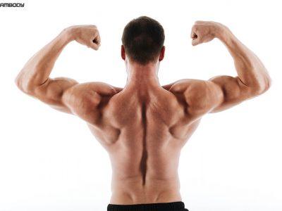 تمرینات تقویت عضلات پشت بدن